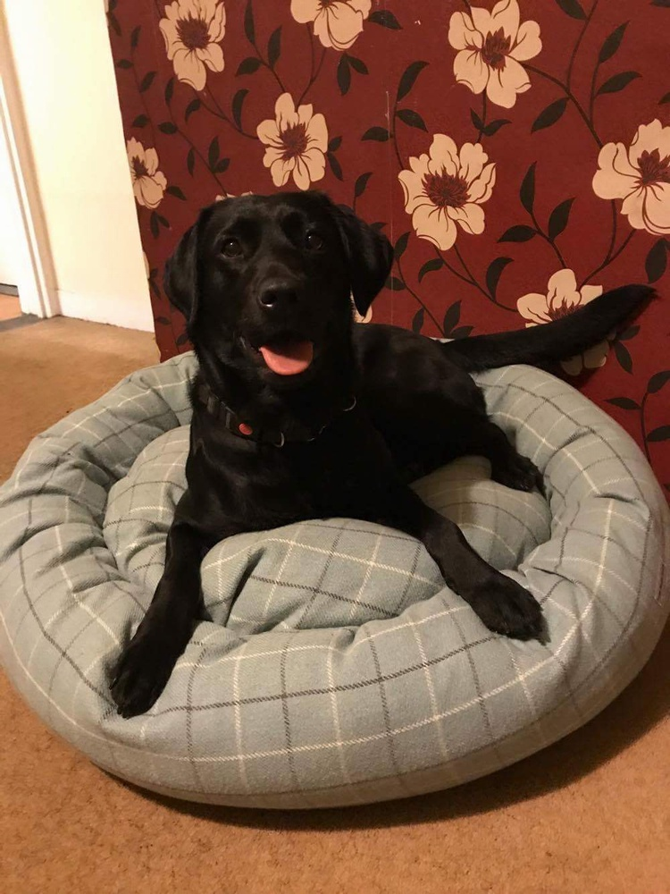 TEAL LOVES HER NEW BED!